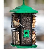 This Suet/Seed Combo