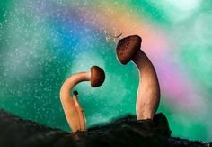 Wonderland by AimishBoy (Nadav Bagim) on 500px