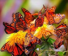 A  colorful group of butterflies.
