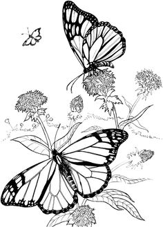 Butterfly Coloring Pages 40 | Purple Kitty http://purplekittyyarns.com/coloring-pages/butterfly-coloring-page40