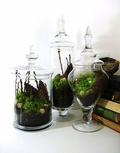 Apothecary terrariums. I heart them!