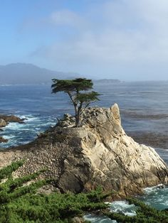 The Lone Cypress  Carmel-by-the-Sea Ca