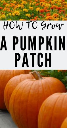 How to grow a pumpkin patch in your backyard using seeds! Are you planting pumpkin seeds, or buying plants? It might be easier to get plants, but it's more expensive, and planting seeds is a lot more fun ; Planting Pumpkin Seeds, Pumpkin Garden, Diy Pumpkin, Planting Seeds, Pumpkin Trellis, Pumpkin Patch Kids, Pumpkin Patch Birthday, Best Pumpkin Patches, Pumpkin Field
