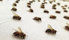 Artist Sarah Hatton's Dead Bee Art Brings Attention to Serious Environmental Issues | Complex