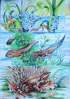 JOLANTA  &  EWA  LUDWIKOWSKA    llustration for children's  books.