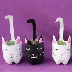 Gatitos gatitos!!! Hermosos gatitos con echeverias en Yollotli Cactus #gatitos #cat #macetas #cactus #suculenta #echeveria #YollotliCactus…