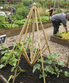 Garden - Wondering what to do with that outdoor umbrella that no longer works? Check out this upcycled outdoor umbrella turned garden trellis via Dirt Du Jour!