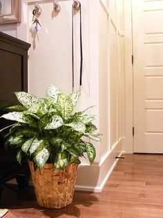 About Houseplants - check out link - the whimisical hooks are a great idea too (empty hooks are boring)