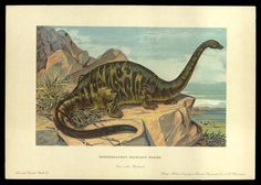 Brontosaurus - Early Prehistoric Animal and Dinosaur Pictures