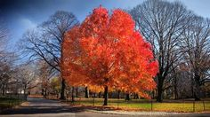 Fall: The Color of Central Park Filmed over Six Months