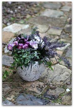 寄せ植え♪ | *Garden Frais* ガーデニング オタク?の日記