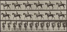 Animal Locomotion (Plate 580) by Museum of Photographic Arts Collections, via Flickr