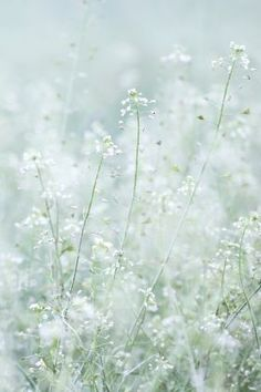 Mint Green Aesthetic, Flower Aesthetic, White Aesthetic, Nature Posters, Beautiful Flowers Wallpapers, Green Theme, Little Flowers, Flower Wallpaper, Cool Artwork