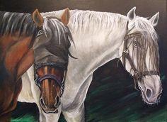 Paarden - 50plusser.nl