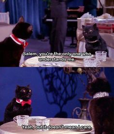 Sabrina the Teenage Witch! (Salem was the best) haha i sooo love this cat Humor Mexicano, Salem Sabrina, Sabrina Cat, Reaction Pictures, Funny Pictures, Funny Pics, Salem Cat, Salem Saberhagen, Cat Memes