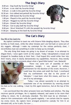 Dog and Cat's Diarys - Little bit of a difference  :)