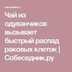 Чай из одуванчиков вызывает быстрый распад раковых клеток   Собеседник.ру