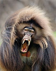 Zoo Animals – Cute Animals – Funny Animals – An Amazing Zoo Trip Nature Animals, Zoo Animals, Animals And Pets, Funny Animals, Cute Animals, Primates, Mammals, Beautiful Creatures, Animals Beautiful