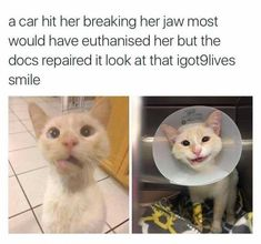 33 Stupidly Cute Animal Memes That'll Definitely Make You Squee - Memebase - Funny Memes Cute Animal Memes, Cute Funny Animals, Cute Cats, Funny Cat Memes, Funny Cats, I Love Cats, Crazy Cats, Animals And Pets, Baby Animals
