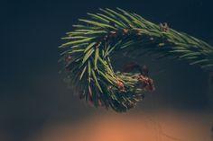 Niklas Hundtofte Photography by niklashundtofte #ErnstStrasser #Dänemark #Denmark Niklas, Dandelion, Flowers, Plants, Photography, Photograph, Dandelions, Florals, Photo Shoot