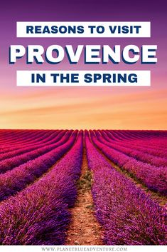 Want to travel to Provence, France but not sure when to go? Here are 5 Reasons to Visit Provence in the Spring. I things to do in Provence I things to do in France I visit Provence I France travel I what to do in Provence I why visit Provence France I when should I visit Provence I Spring in France I Spring in Provence I Provence in spring I Provence attractions I Europe travel I when to visit Provence I places to go in France I destinations in France I where to go in France I #France… Backpacking Europe, Europe Travel Guide, Travel Guides, Outfits Winter, Outfits Spring, Cool Places To Visit, Places To Travel, Places To Go, Europe Destinations