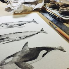 Three Stacked Whales watercolor in-progress and now available as limited edition art prints! By Two if by Sea Studios