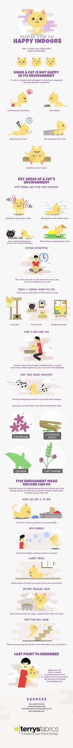 @hotinfographics : How To Keep Indoor Cats Happy Infographic - https://t.co/hsSu033PE9