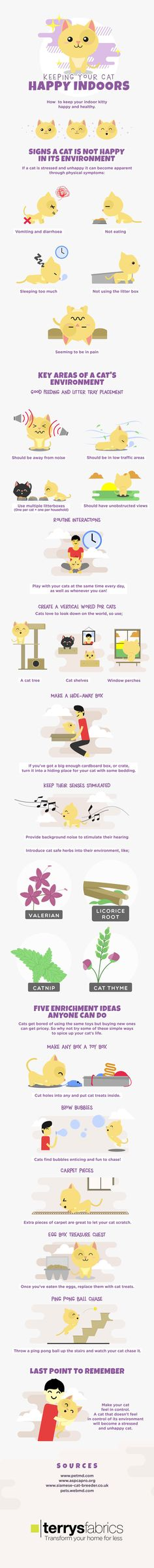 Not everyone gets a chance to let their cats out on a regular basis. If you are planning to keep your cats inside all the time, you need to make sure they are well taken care of. This infographic from Terry Fabrics covers how you can keep indoor cats happy: