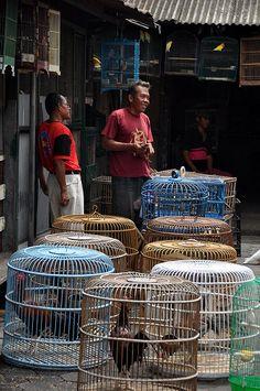 (Pasar Ngasem Bird Market in Yogyakarta)