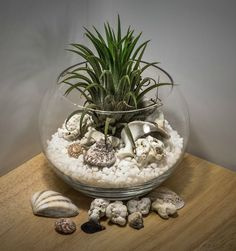 Fish bowls make the perfect air plant containers.  See more ideas on my blog