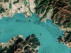 Cultivo de algas, granjas en el mundo y su importancia