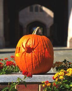 University Of Richmond, Pumpkin Carving, Vegetables, Food, Meal, Eten, Vegetable Recipes, Meals, Veggies