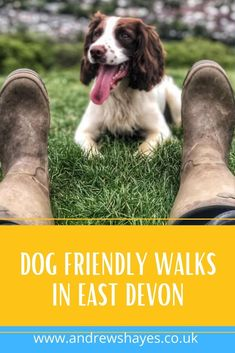 Dog Friendly Holidays, South West Coast Path, Lyme Regis, Pet Dogs, Pets, Dog Walking, Dog Friends, Devon, Walks