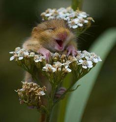 Happy! - ein Gute-Laune-Bilder-Post!