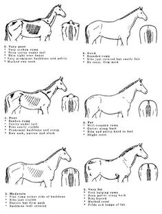 Six Determinants to Horse Health. My horses are too fat!