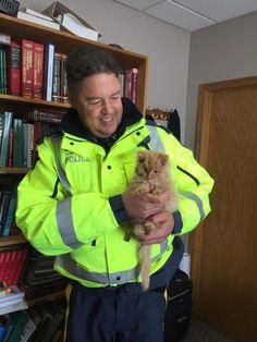 Nearly frozen kitten rescued from Canadian blizzard