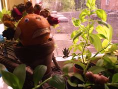 Mr Angry Orange is crowned with a chaplet of roses.