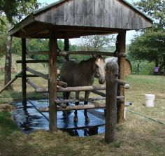 All Purpose Equine Care Station (extra large stocks) Horse Paddock, Horse Barns, Horses, Farm Projects, Animal Projects, Horse Feeder, Horse Barn Designs, Barns Sheds, Horse Supplies