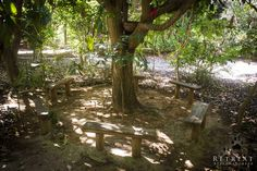 Place to unwind in the shade of old mango tree, at our nature Retreat Bela Natureza