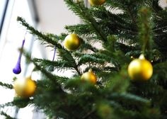 Gold and purple baubles on real Nature at Work office Christmas Tree