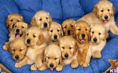 All these puppies!
