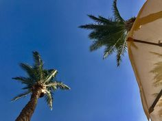 #egypt #summer #travel #chillin #palms
