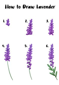 Easy six step lavender drawing