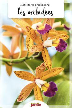 Il y a un vrai hiatus entre la perception que l'on a des orchidées, plantes soit-disant fragiles, et la réalité : ce sont de vraies costaudes qui refleurissent dans les mains les moins expérimentées. #orchidees #orchidee #entretenir #conseil #entretien Perception, Gardens, Botany, Plants, Love