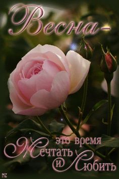 Service Map, Sweet Stories, Butterfly Art, Tulips, Presentation, Rose, Flowers, Holidays, Pink