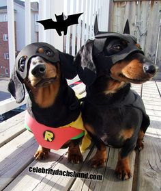 BATDOG and Robin Sausage dogs- i want them!!!! x