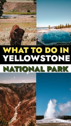 Are you ready for the perfect 1 to 5 day Yellowstone National Park itinerary?! Planning a trip to Yellowstone can feel overwhelming, so this guide, complete with maps and itineraries for one day, two days, and more will help you plan your trip.  #yellowstone #yellowstonenationalpark #nationalpark #itinerary #usa Road Trip Packing, Road Trip Essentials, Road Trip Hacks, Road Trips, Family Vacation Destinations, Cruise Vacation, Cruise Tips, Family Vacations, Disney Cruise