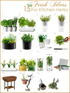 plants in kitchen | Fresh Herb Garden in the Kitchen | Kitchen Designs Blog of Kitchen ...