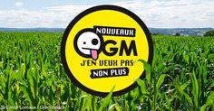 NOUVEAUX OGM, NON MERCI ! - Les entreprises de l'agrochimie ont trouvé une nouvelle recette pour faire entrer les OGM dans nos champs et nos assiettes : contourner la réglementation européenne en affirmant que les nouveaux OGM ne sont pas des OGM. Signez la pétition ! Photo © Pierre Baelen / Greenpeace