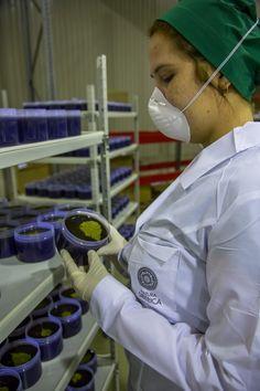 Os enseñamos en unas fotos progresivas de como se preparan los productos de #cosmeticanatural en los laboratorios de Natura Siberica Rusia. www.krous.es
